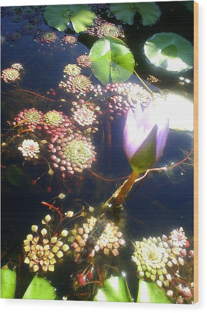 Root Of Beauty Wood Print by Scarlett Royal