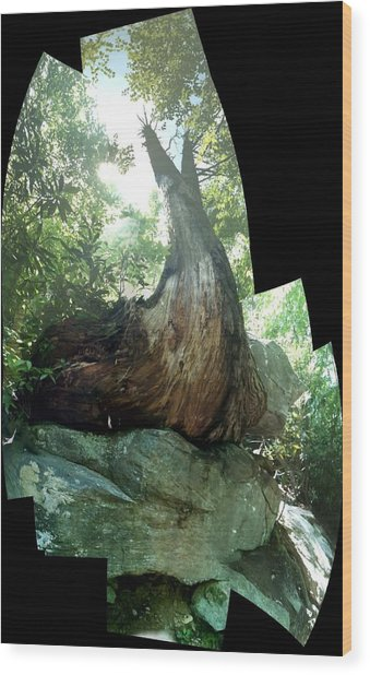 Root Over Rock Wood Print