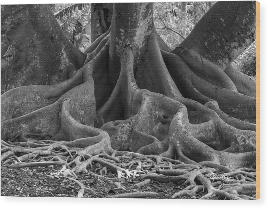 Roots Eleven Wood Print