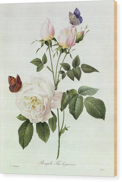 Rosa Bengale The Hymenes Wood Print
