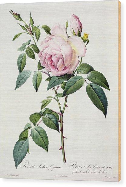 Rosa Indica Fragrans Wood Print
