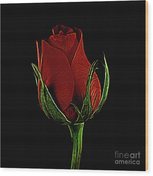 Rose 123 Wood Print