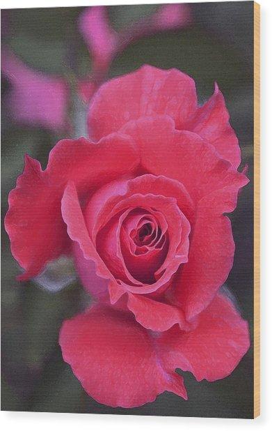 Rose 160 Wood Print