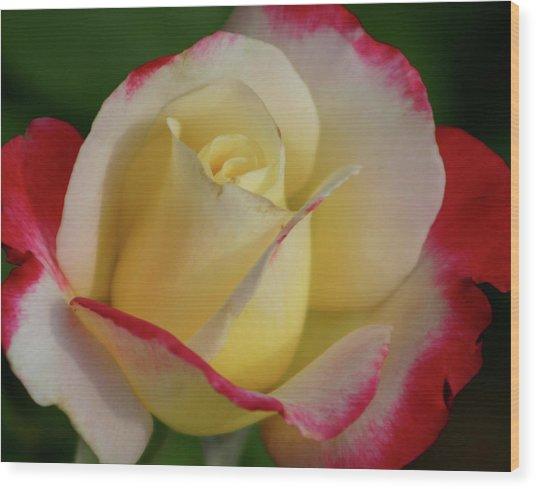Rose 3913 Wood Print