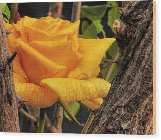 Rose And Thorns Wood Print