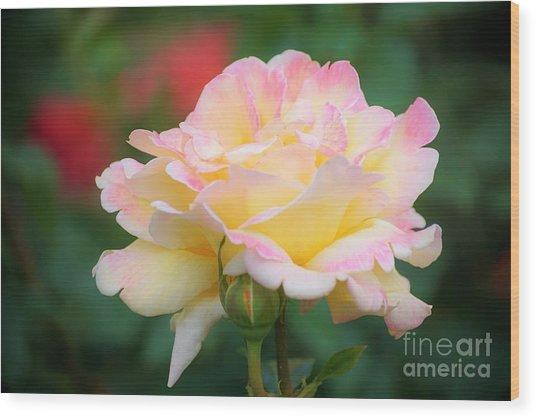 Rose Beauty Wood Print