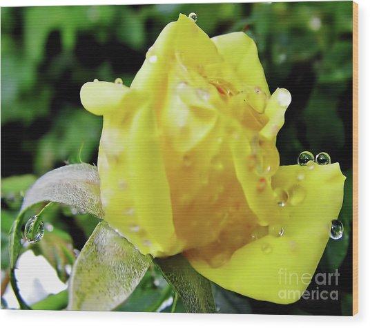 Rose Bud Dew Drops Wood Print