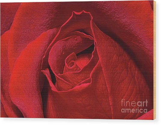 Wood Print featuring the photograph Rose Bud by Ray Shiu