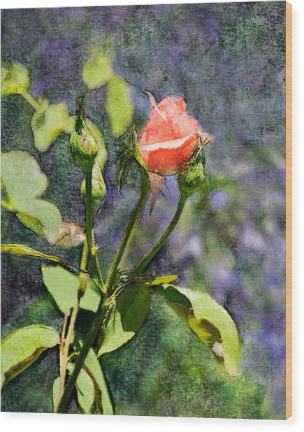 Rose Elegance Art Wood Print