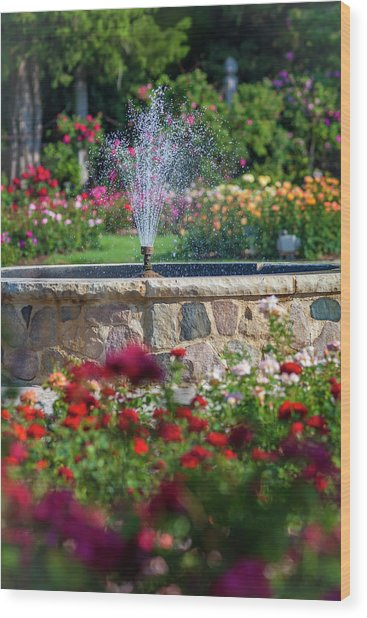 Rose Fountain Wood Print