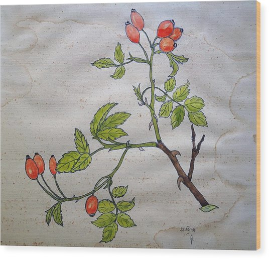 Rose Hip Wood Print