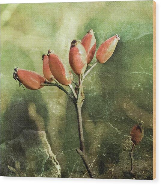 Rose Hips Wood Print