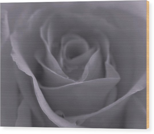 Rose In Black And White  Wood Print by Juergen Roth