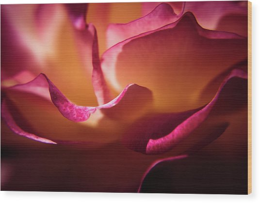 Rose In The Afternoon Wood Print