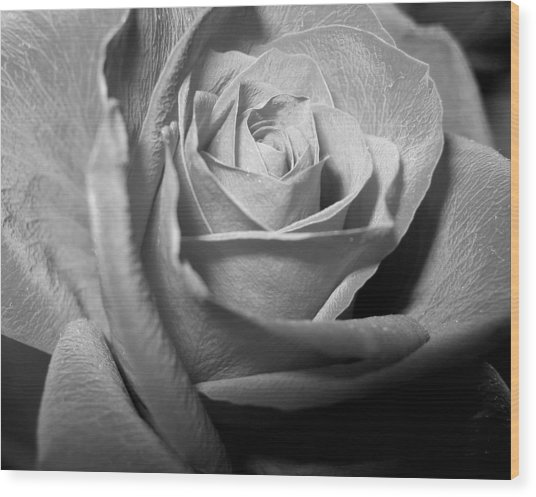 Rose Wood Print by Lindsey Orlando