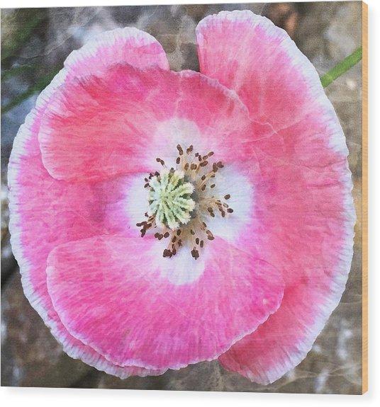 Rose Marble Wood Print