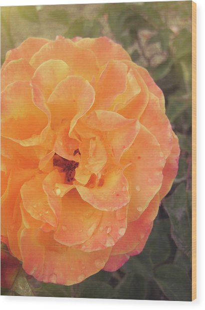 Rose Of Seville Wood Print by JAMART Photography