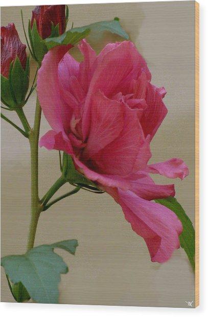 Rose Of Sharon Wood Print by Debra     Vatalaro