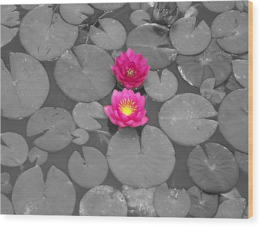 Rose Of The Water Wood Print