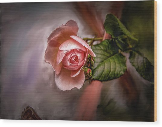 Rose On Paint #g5 Wood Print