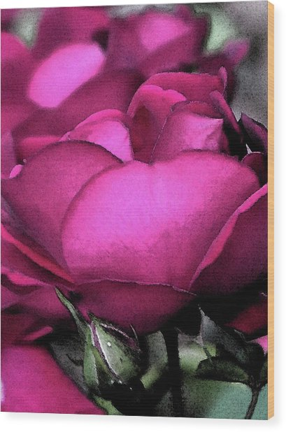 Rose Petals Wood Print by Michele Caporaso