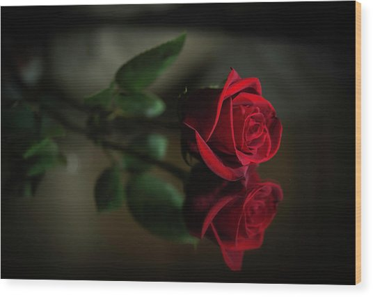 Rose Reflected Wood Print