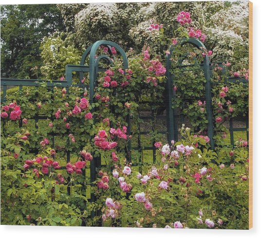 Rose Trellis Wood Print