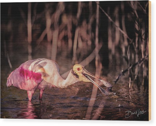 Wood Print featuring the photograph Roseate Spoonbill Gulping by David A Lane