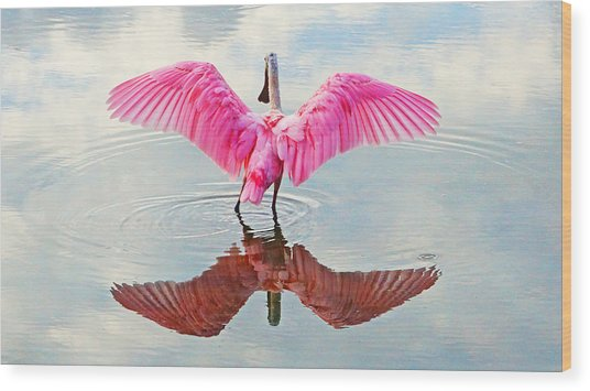 Roseate Spoonbill Pink Angel Wood Print