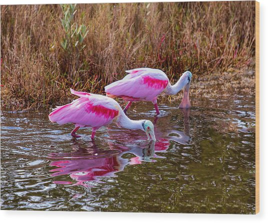 Roseate Spoonbills Swishing For Food Wood Print