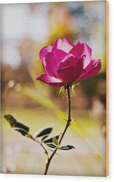 Rosebud Wood Print