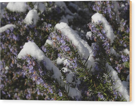Rosemary Snow Eclairs Wood Print