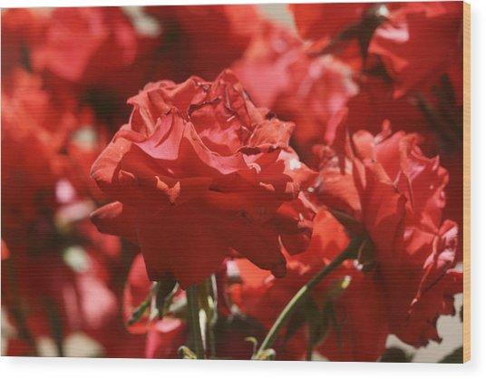 Roses 3 Wood Print