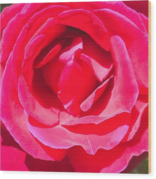 #roses Are #red ...#violets Are #blue Wood Print