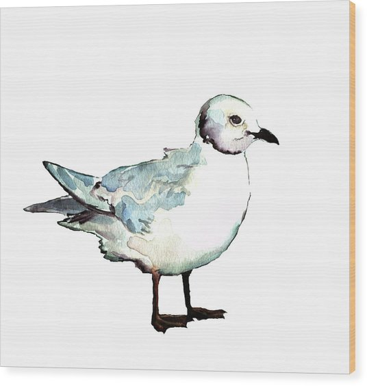 Ross's Gull Wood Print
