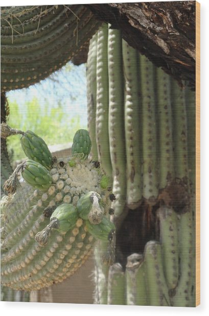 This Cactus Is Rotten To The Core Wood Print