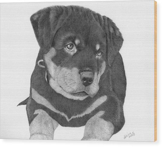 Rottweiler Puppy Wood Print