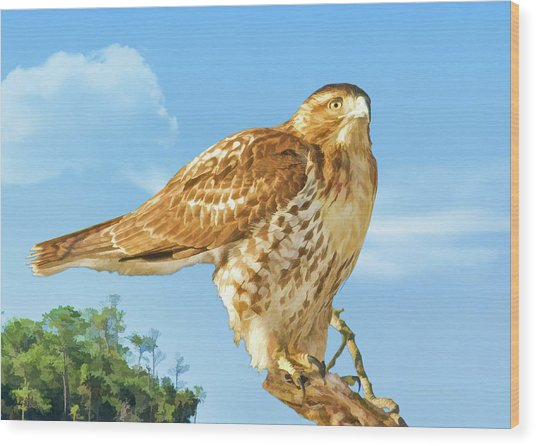 Rough-legged Perch Wood Print by Delores Knowles
