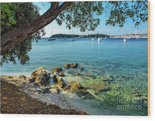 Rovinj Old Town, Harbor And Sailboats Accross The Adriatic Through The Trees Wood Print