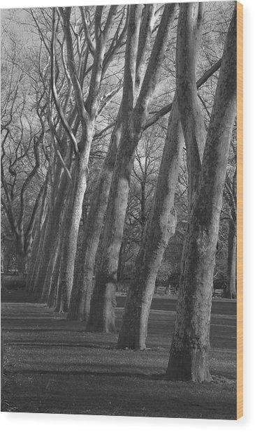 Row Trees Wood Print