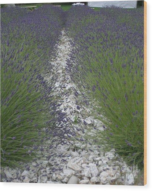 Rows Of Lavender Wood Print by Robert Torkomian
