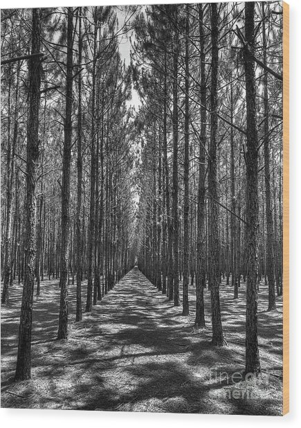 Rows Of Pines Vertical Wood Print