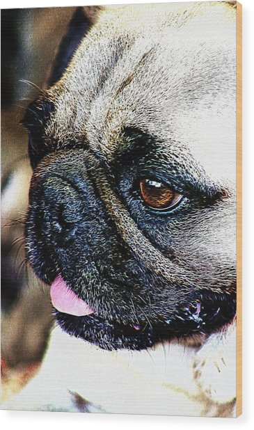 Roxy The Pug Wood Print