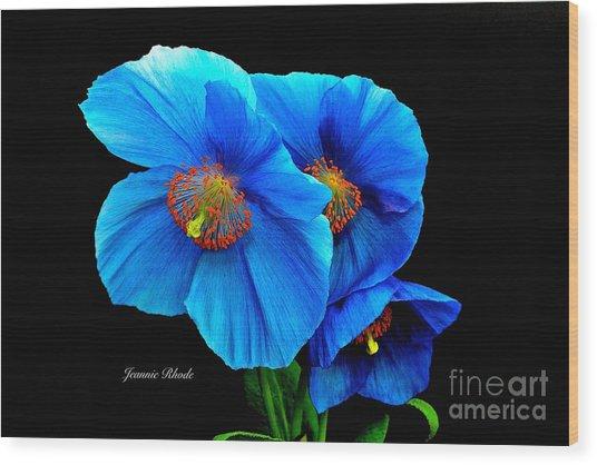 Royal Blue Poppies Wood Print