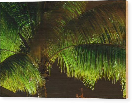 Royal Palm Night Out Wood Print
