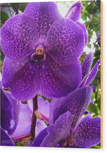 Royal Purple Orchids Wood Print