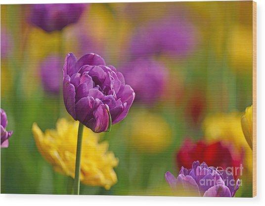 Royal Tulips Wood Print
