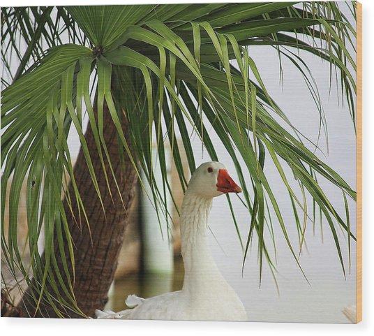 Royale Goose Wood Print by Francesco Roncone