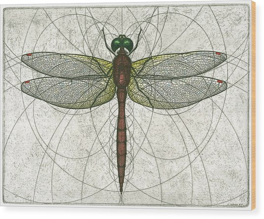 Ruby Meadowhawk Dragonfly Wood Print