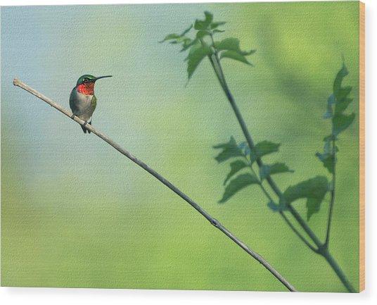 Ruby Red Perch Wood Print